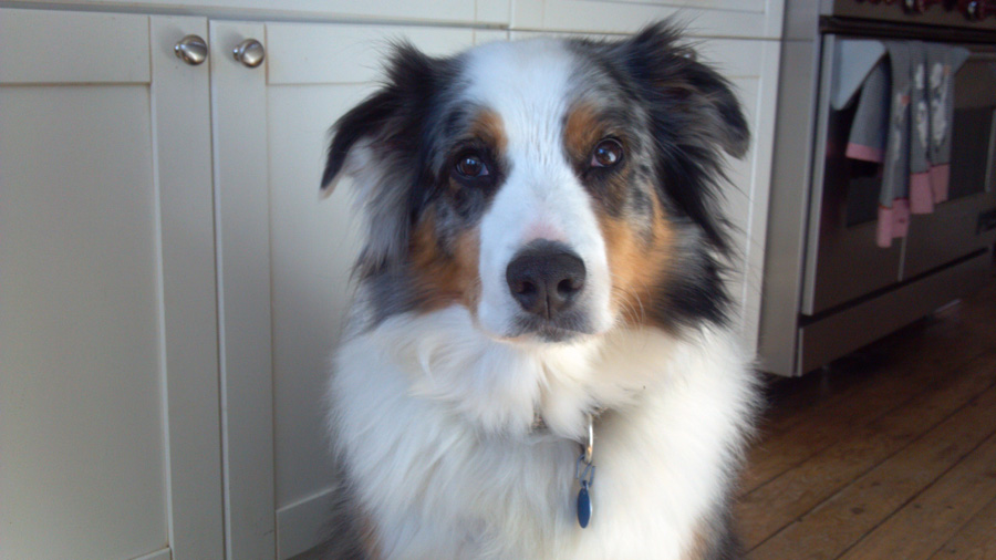 dog-contact